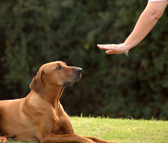 Hand signals for deaf dog 101796723