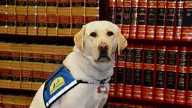 188: Courthouse Dogs – Therapy Dogs in Courthouses!