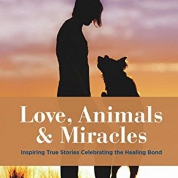 "413: Dr. Bernie Siegel: ""Love, Animals and Miracles"""