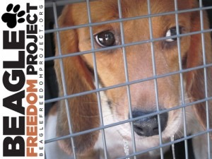 286: Beagle Freedom Project!!! Advocates for Animals in Laboratory Testing