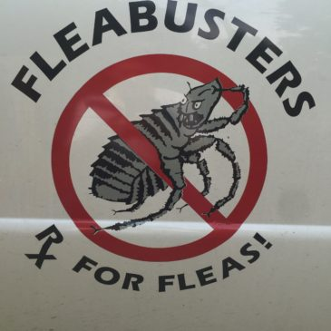 388: Chemical Flea Meds – How they work/Why dangerous? : Fleabusters
