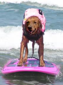 446: Surf Dog Ricochet – The Surfing Therapy Dog!